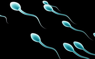 Men: Your Meal May Be Jeopardizing Your Sperm